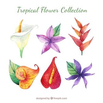 素敵な水彩の熱帯の花collectio