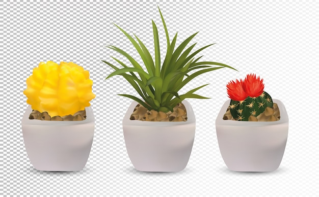 Collection 3d realistic cactus with  flower.