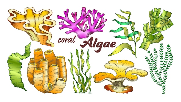 Collection algae seaweed coral