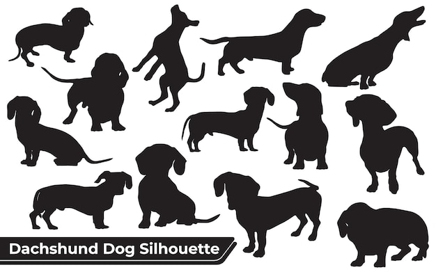 Collection of animal dachshund dog in different positions