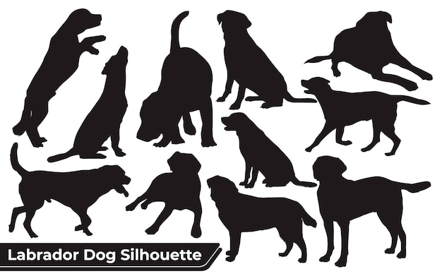Collection of animal labrador dog in different positions