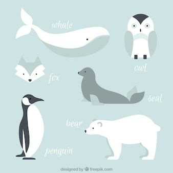 Collection of arctic animals