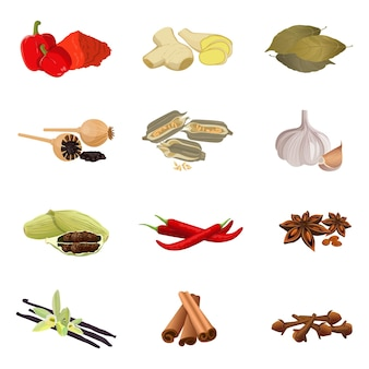 Collection of aromatic herbs red paprika, ginger root, bay leaves, dry poppy, sesame seeds, garlic clove, red pepper, anise star, vanilla sticks with orchid flower, cinnamon realistic