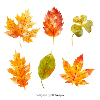 Collection of autumn leaves watercolor style
