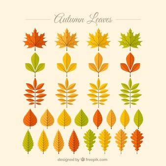 Raccolta di foglie di autunno