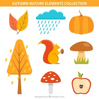 Collection of autumnal items with a squirrel Free Vector