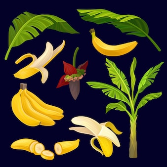 Collection of banans and palm leaves.