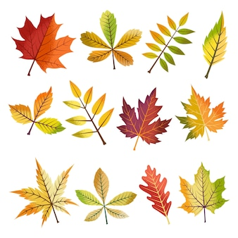 Collection of beautiful autumn leaves set.