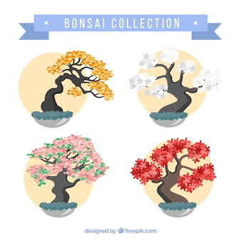 Collection of beautiful bonsais