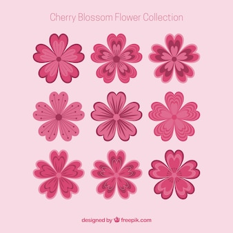 Collection of beautiful cherry blossoms