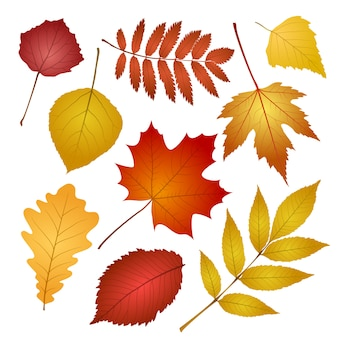 Collection beautiful colourful autumn leaves  on white background.  illustration