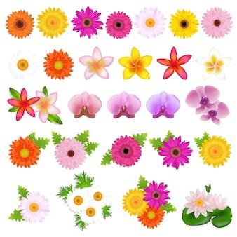 コレクションの美しい花、白い背景、イラスト
