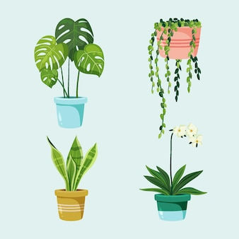 Collection of beautiful houseplants in pots