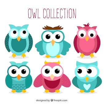 Collection of beautiful owls with big eyes
