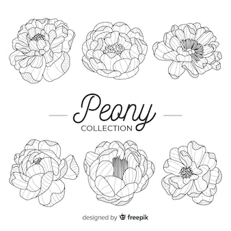 Collection of beautiful peony flowers