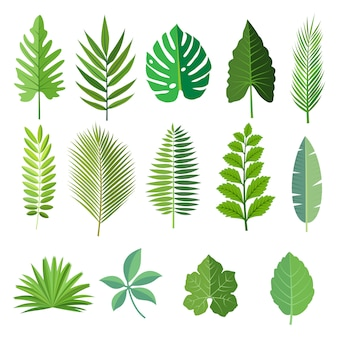 Collection of beautiful tropical leaves set.