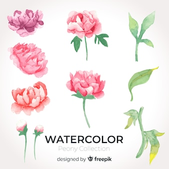 Collection of beautiful watercolor peony flowers