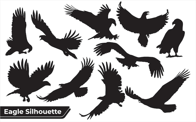 Collection of bird eagle silhouettes in different positions