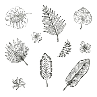 Collection of black outline tropical leaves