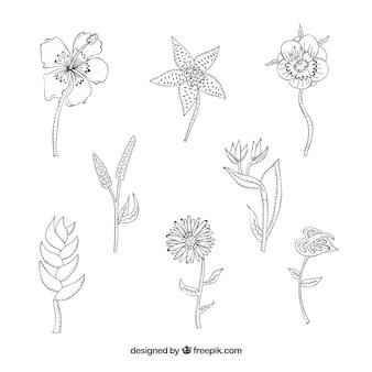 Raccolta di fiori tropicali disegnati a mano in bianco e nero