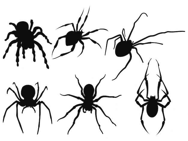 Collection of black and white spiders.