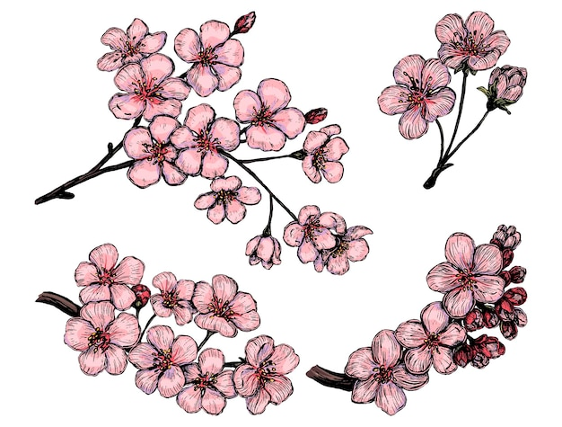 Collection of blooming branches of sakura. set of cherry flowers. hand drawn vector illustration. botanical sketches isolated on white. colored elements for design.