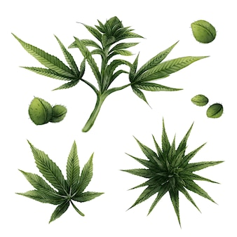 Collection of botanical cannabis leaves