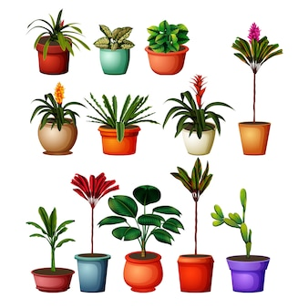 Collection of the botanical plants in the pots