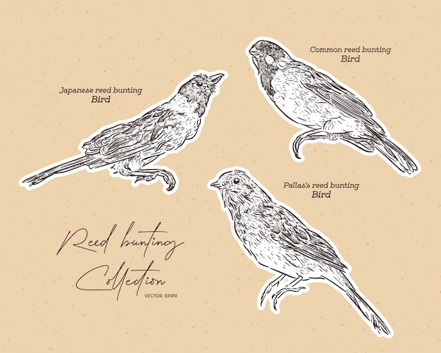 Collection of bunting birds, hand draw sketch