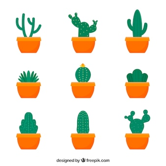 Collection of cactu in flat design