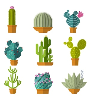 Collection of cactus in flat style.