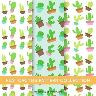 Raccolta di cactus pattern