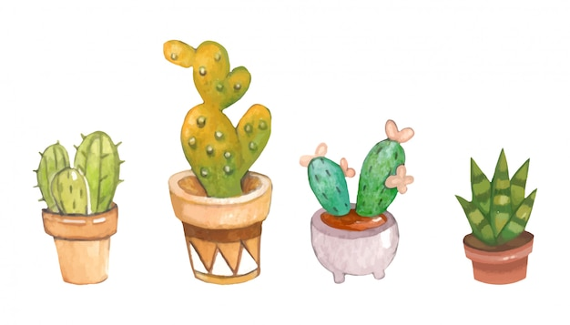 The collection of cactus in the plant pot on the white background