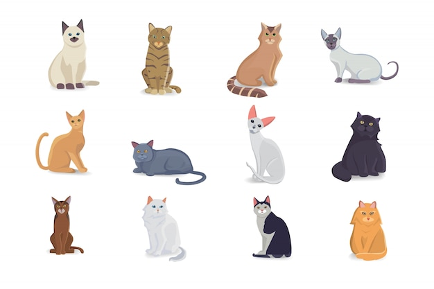 다른 품종의 컬렉션 고양이. 흰색 배경에 고립 된 고양이 벡터