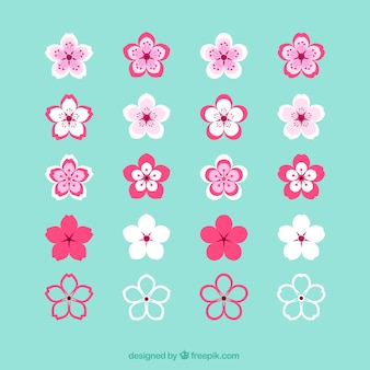 Collection of cherry blossoms