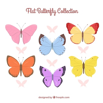 Collection of colored butterfly