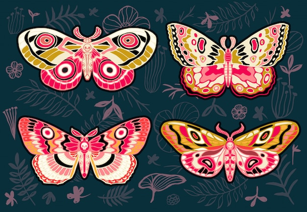 Collection of colorful butterflies, night tropical moths hawkmoth on floral