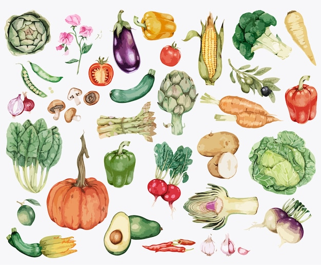 Collection of colorful vegetable illustration