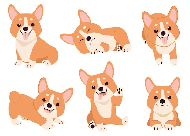 Collection of corgi in many action