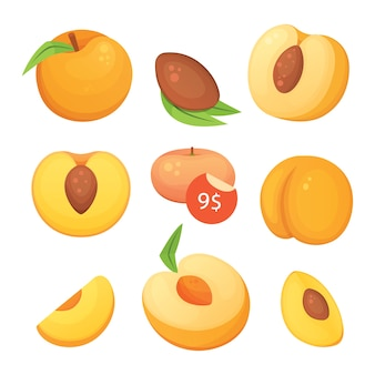 Collection of  cut and whole  peaches. vector apricot illustration in curtoon style.