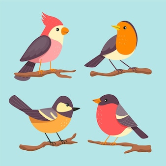 Collection of cute drawn birds