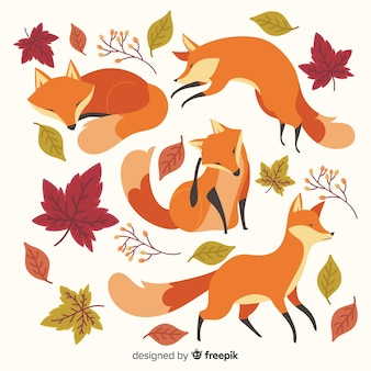 Collection of cute little foxes