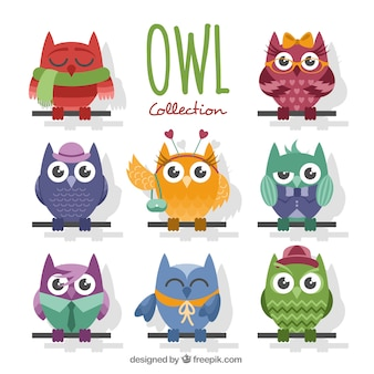 Collection of cute owls in flat design