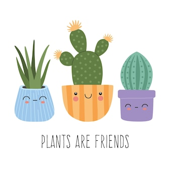 Collection of cute succulents or exotic cactus with funny faces in colourful pots