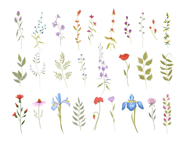 Collection of cute wild flowers. set of botanic floral elements. isolated vector illustration