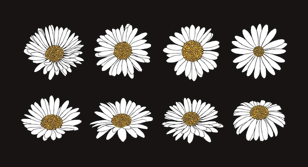 Collection of daisy flower with ink style