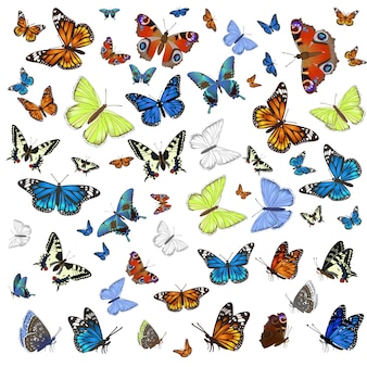 A collection of different butterflies flying and seated.