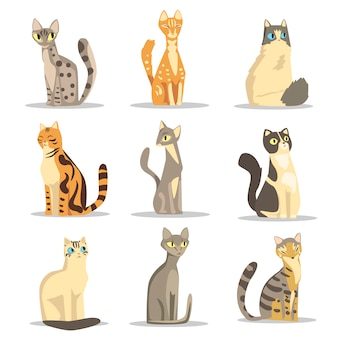 Collection of different cats breeds, cute pet animal  illustrations
