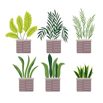 Collection of different decoration house indoor garden potted plants
