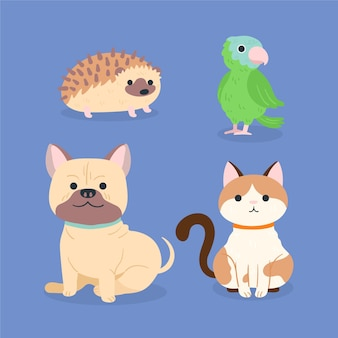 Collection of different domestic pets